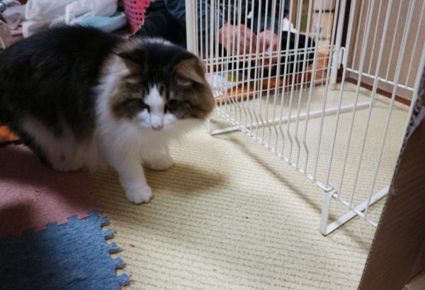 ストーブと猫