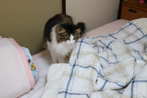 猫猫ブログ